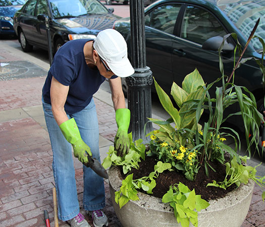 Volunteers plant tropicals along Market Street in an effort to beautify Downtown.