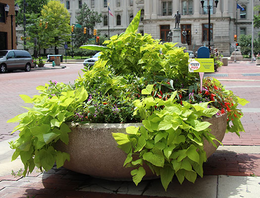 Sponsor a planter and help the Downtown Indy Beautification Fund with Inspired Beauty.